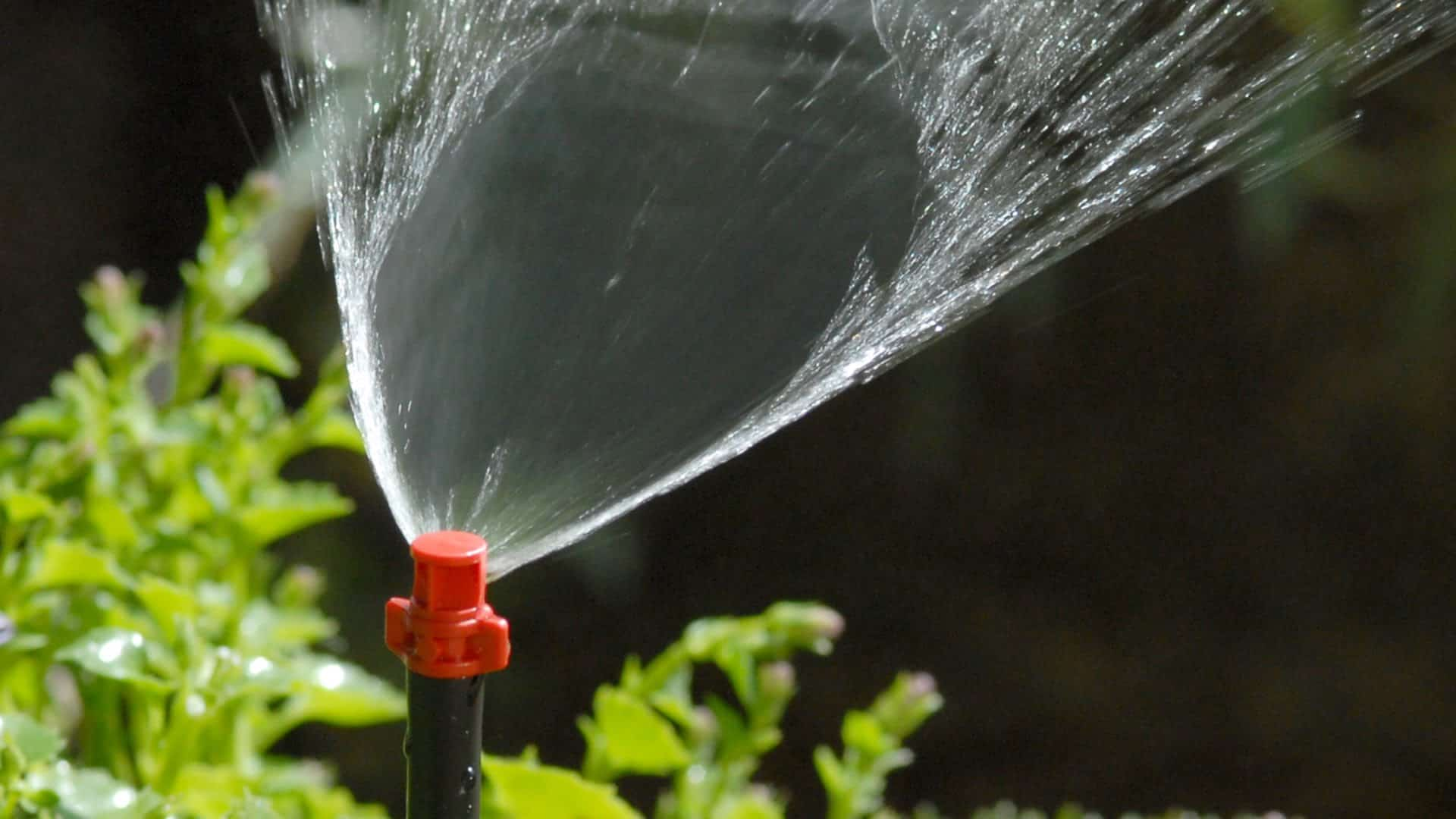 Image result for micro jet sprinklers