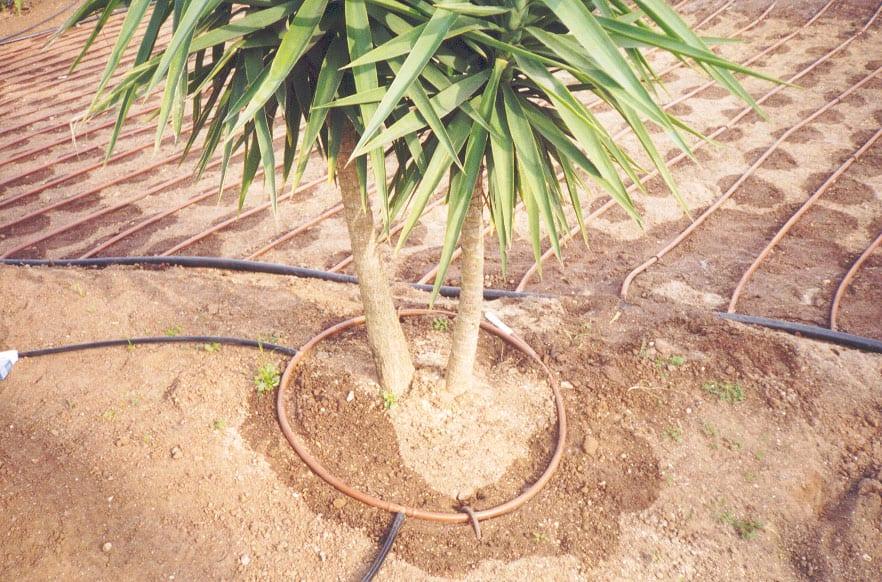 Drip Irrigation and Micro Irrigation